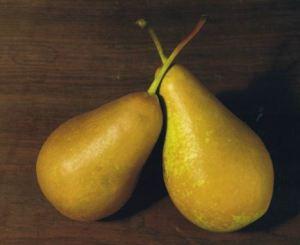 Trionfo di Vienne, fonte: P. Odorizzi: Profumi e sapori perduti - Il fascino della frutta antica Vol.II (2005)