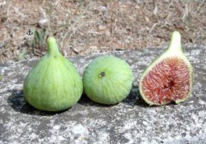 Verdone, fonte: http://www.archeologiaarborea.org/it/il-frutteto-collezione/dei-fichi/247-fico-verdone