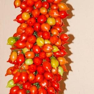 Vesuvio Tomate. Quelle Zollinger Samen