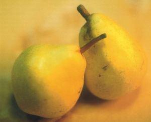 Williams, fonte: P. Odorizzi: Profumi e sapori perduti - Il fascino della frutta antica Vol.II (2005)