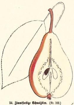 Zimmtfarbige Schmalzbirn, Quelle: Iglhauser B., Keser M. (1998): Pirarium.