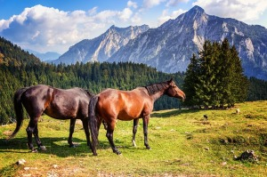 horse-2090986_640; Source: pixabay.com