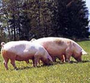 (Foto Landwirtschaft.ch)