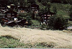 Roggenfeld reif in Ried/Lötschental im Jahr 1983, Bild R.Vonmoos
